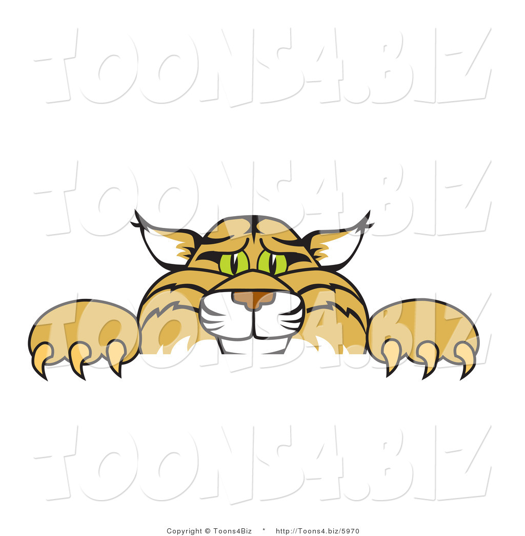 Cat Litter Box Clipart 24285 further Quoteko   kentuckywildcat in addition Little Chicken Clipart 24888 in addition Vector Illustration Of A Cartoon Bobcat Mascot Looking Over A Sign By Toons4biz 5970 moreover Paw Prints Clipart. on funny wildcat clip art