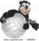 Vector Illustration of a Cartoon Black Bear School Mascot Grabbing a Volleyball by Toons4Biz