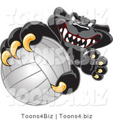 Vector Illustration of a Cartoon Black Jaguar Mascot Grabbing a Volleyball by Toons4Biz