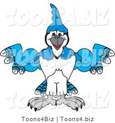 Vector Illustration of a Cartoon Blue Jay Mascot Flexing by Toons4Biz