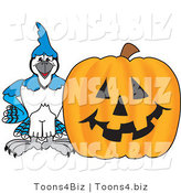 Vector Illustration of a Cartoon Blue Jay Mascot with a Halloween Pumpkin by Toons4Biz