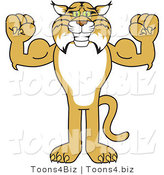 Vector Illustration of a Cartoon Bobcat Mascot Flexing by Toons4Biz