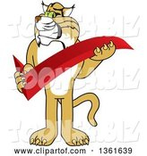 Vector Illustration of a Cartoon Bobcat Mascot Holding a Check Mark, Symbolizing Acceptance by Toons4Biz