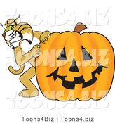 Vector Illustration of a Cartoon Bobcat Mascot with a Pumpkin by Toons4Biz