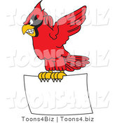 Vector Illustration of a Cartoon Cardinal Mascot Flying with a Blank Sign by Toons4Biz