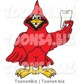 Vector Illustration of a Cartoon Cardinal Mascot Holding a Tooth by Toons4Biz