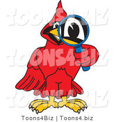 Vector Illustration of a Cartoon Cardinal Mascot Using a Magnifying Glass by Toons4Biz