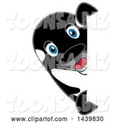 Vector Illustration of a Cartoon Killer Whale Orca Mascot Looking Around a Sign by Toons4Biz