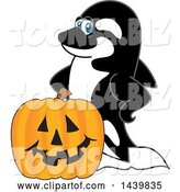 Vector Illustration of a Cartoon Killer Whale Orca Mascot with a Halloween Pumpkin by Toons4Biz