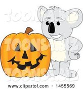 Vector Illustration of a Cartoon Koala Bear Mascot with a Halloween Jackolantern Pumpkin by Toons4Biz