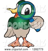 Vector Illustration of a Cartoon Mallard Duck School Mascot Looking Through a Magnifying Glass by Toons4Biz
