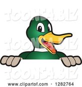 Vector Illustration of a Cartoon Mallard Duck School Mascot Smiling over a Sign by Toons4Biz