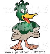 Vector Illustration of a Cartoon Mallard Duck School Mascot with Funky Hair by Toons4Biz