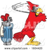 Vector Illustration of a Cartoon Red Cardinal Bird Mascot Golfing by Toons4Biz