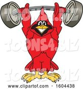 Vector Illustration of a Cartoon Red Cardinal Bird Mascot Lifting a Heavy Barbell by Toons4Biz