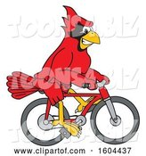 Vector Illustration of a Cartoon Red Cardinal Bird Mascot Riding a Bicycle by Toons4Biz