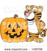 Vector Illustration of a Cartoon Tiger Cub Mascot with a Halloween Pumpkin by Toons4Biz