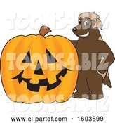 Vector Illustration of a Cartoon Wolverine Mascot with a Halloween Pumpkin by Toons4Biz
