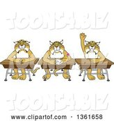 Vector Illustration of Cartoon Bobcat Mascots Sitting at Desks, One Raising His Hand, Symbolizing Respect by Toons4Biz