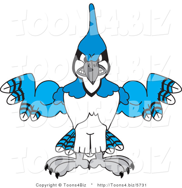 Vector Illustration of a Cartoon Blue Jay Mascot with Big Muscles