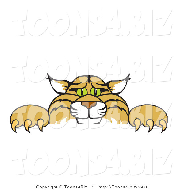 Vector Illustration of a Cartoon Bobcat Mascot Looking over a Sign