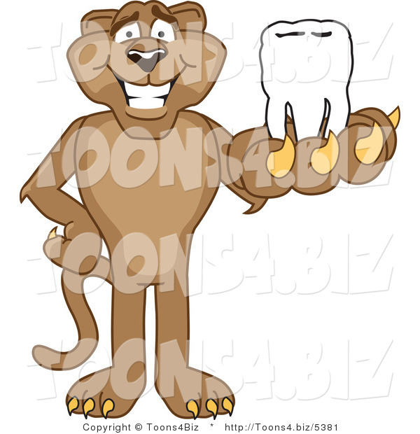Vector Illustration of a Cartoon Cougar Mascot Character Holding a Tooth