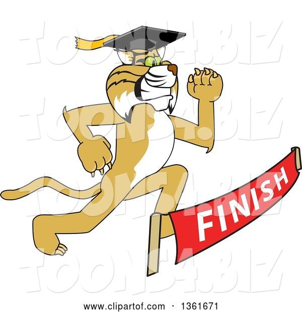 Vector Illustration of a Cartoon Determined Bobcat Mascot Graduate Running to a Finish Line