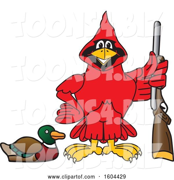 Vector Illustration of a Cartoon Red Cardinal Bird Mascot Duck Hunting