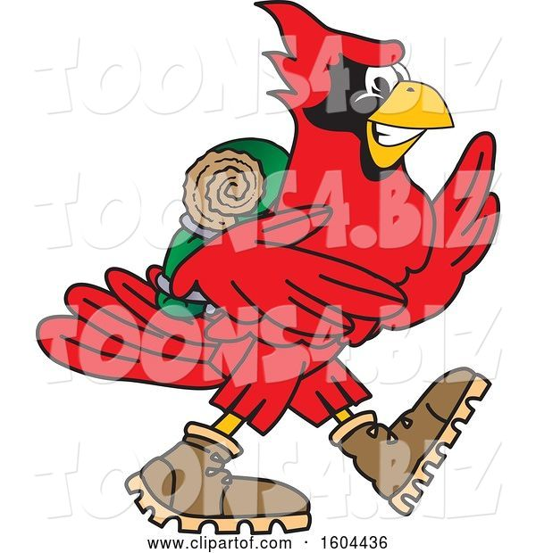 Vector Illustration of a Cartoon Red Cardinal Bird Mascot Hiking