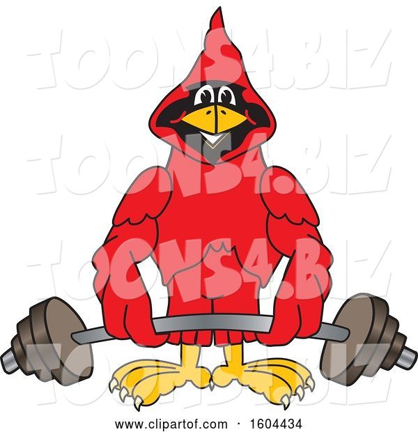 Vector Illustration of a Cartoon Red Cardinal Bird Mascot Lifting a Barbell