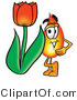 Illustration of a Cartoon Fire Droplet Mascot with a Red Tulip Flower in the Spring by Toons4Biz