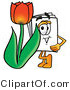Illustration of a Cartoon Paper Mascot with a Red Tulip Flower in the Spring by Toons4Biz