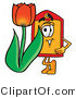 Illustration of a Cartoon Price Tag Mascot with a Red Tulip Flower in the Spring by Toons4Biz