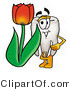Illustration of a Cartoon Tooth Mascot with a Red Tulip Flower in the Spring by Toons4Biz