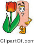 Illustration of an Adhesive Bandage Mascot with a Red Tulip Flower in the Spring by Toons4Biz