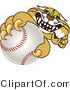 Vector Illustration of a Cartoon Bobcat Mascot Grabbing a Baseball by Toons4Biz