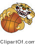 Vector Illustration of a Cartoon Bobcat Mascot Grabbing a Basketball by Toons4Biz