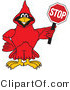 Vector Illustration of a Cartoon Cardinal Mascot Holding a Stop Sign by Toons4Biz