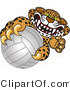 Vector Illustration of a Cartoon Cheetah Mascot Grabbing a Volleyball by Toons4Biz