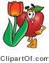 Vector Illustration of a Red Apple Mascot with a Red Tulip Flower in the Spring by Toons4Biz